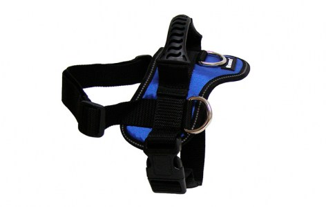 goget-harness-blue-large