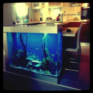 images/stories/virtuemart/product/enydreio-bluefish-kitchen
