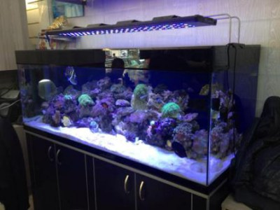 images/stories/virtuemart/product/enydreio-bluefish-reef-125